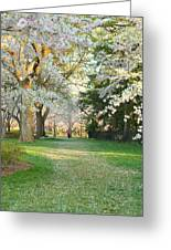 Cherry Blossoms 2013 - 075 Greeting Card by Metro DC Photography