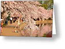 Cherry Blossoms 2013 - 076 Greeting Card