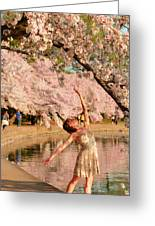 Cherry Blossoms 2013 - 077 Greeting Card
