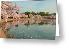 Cherry Blossoms 2013 - 083 Greeting Card by Metro DC Photography