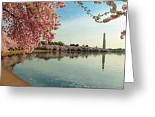 Cherry Blossoms 2013 - 084 Greeting Card