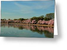 Cherry Blossoms 2013 - 088 Greeting Card