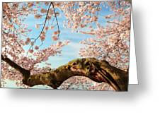 Cherry Blossoms 2013 - 089 Greeting Card by Metro DC Photography