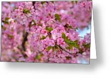 Cherry Blossoms 2013 - 096 Greeting Card