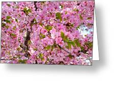 Cherry Blossoms 2013 - 097 Greeting Card