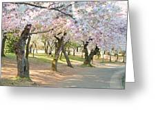 Cherry Blossoms 2013 - 099 Greeting Card