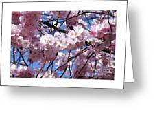 Cherry Blossom Trees Of Branch Brook Park 3 Greeting Card