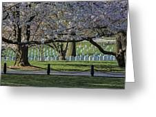 Cherry Blossoms Adorn Arlington National Cemetery Greeting Card