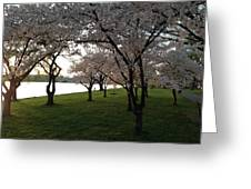 Cherry Blossoms Along The Potomac Greeting Card