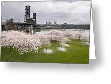 Cherry Blossoms Along Willamette River Greeting Card