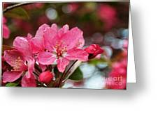 Cherry Blossoms And Greeting Card Blank Greeting Card