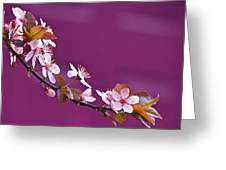 Cherry Blossoms And Plum Door Greeting Card