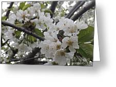 Cherry Blossoms Branching Out Greeting Card