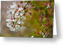 Cherry Blossoms Galore Greeting Card