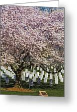 Cherry Blossoms Grace Arlington National Cemetery Greeting Card
