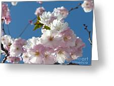 Cherry Blossoms In Spring Xi Greeting Card