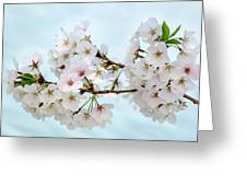 Cherry Blossoms No. 9146 Greeting Card
