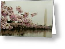 Cherry Blossoms On A Foggy Morning Greeting Card