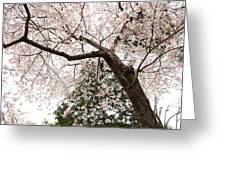 Cherry Blossoms - Washington Dc - 0113115 Greeting Card by DC Photographer