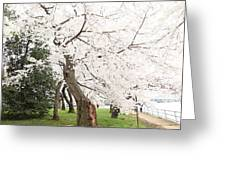 Cherry Blossoms - Washington Dc - 0113135 Greeting Card