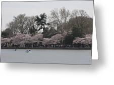 Cherry Blossoms - Washington Dc - 011317 Greeting Card