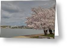 Cherry Blossoms - Washington Dc - 011362 Greeting Card by DC Photographer