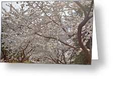 Cherry Blossoms - Washington Dc - 011363 Greeting Card