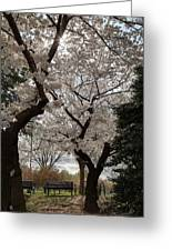 Cherry Blossoms - Washington Dc - 011373 Greeting Card by DC Photographer