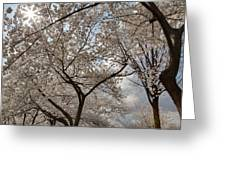 Cherry Blossoms - Washington Dc - 011375 Greeting Card by DC Photographer
