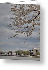 Cherry Blossoms With Jefferson Memorial - Washington Dc - 011312 Greeting Card by DC Photographer