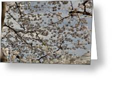Cherry Blossoms With Jefferson Memorial - Washington Dc - 011330 Greeting Card by DC Photographer
