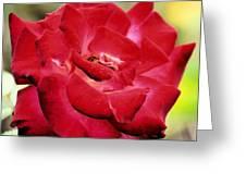 Cherry Cream Rose Greeting Card