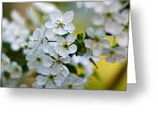 Cherry Flowers Greeting Card