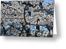 Cherry Lane Series  Picture B Greeting Card