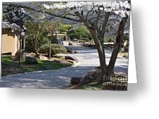 Cherry Lane Series  Picture C Greeting Card