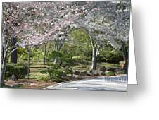Cherry Lane Series  Picture H Greeting Card