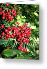Cherry Laurel  Greeting Card