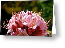 Cherry Mist Azalea Greeting Card