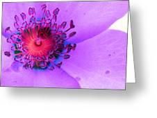 Cherry Pie Rose - Photopower 2825 Greeting Card