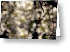 Cherry Tree Abstract Greeting Card