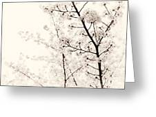Cherry Tree Blossom Artistic Closeup Sepia Toned Greeting Card
