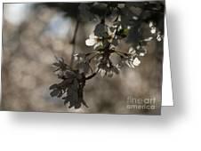 Cherry Tree Blossom Macro Greeting Card
