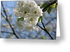 Cherry Tree Petals Greeting Card