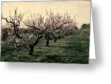 Cherry Trees 2.0 Greeting Card