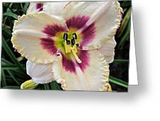 Cherryberry Daylily Greeting Card