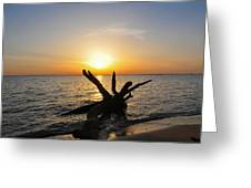 Chesapeake Bay Driftwood At Sunset Greeting Card