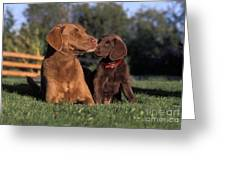 Chesapeake Bay Retrievers Greeting Card