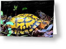 Chesapeake Box Turtle Greeting Card