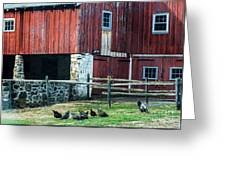 Chester County Chickens Greeting Card
