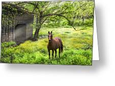 Chestnut Horse In A Sunny Meadow Greeting Card
